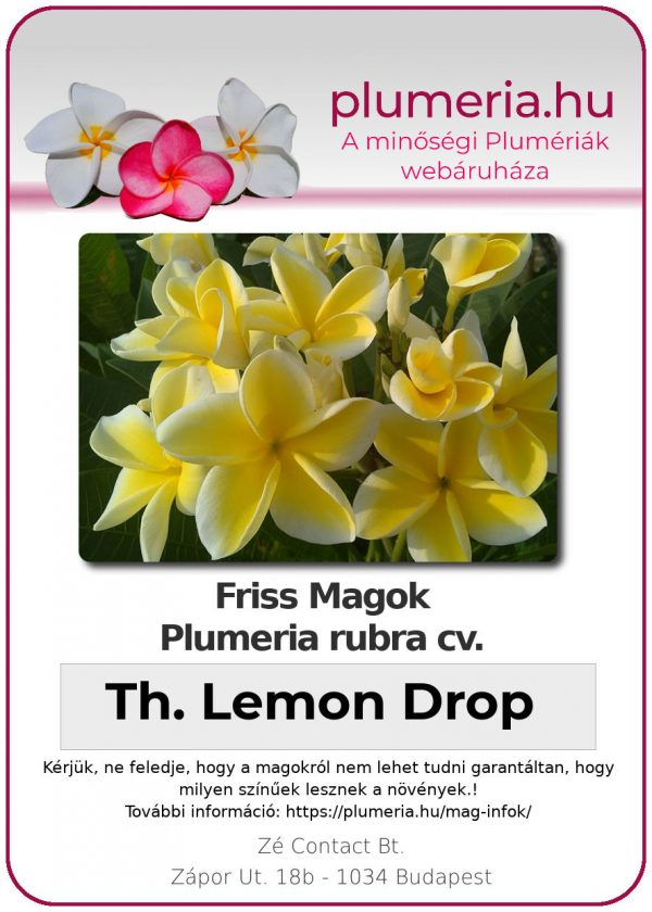 "Plumeria rubra ""Thorntons Lemon Drop"""
