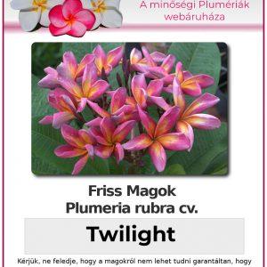 """Plumeria rubra """"Twilight"""""""