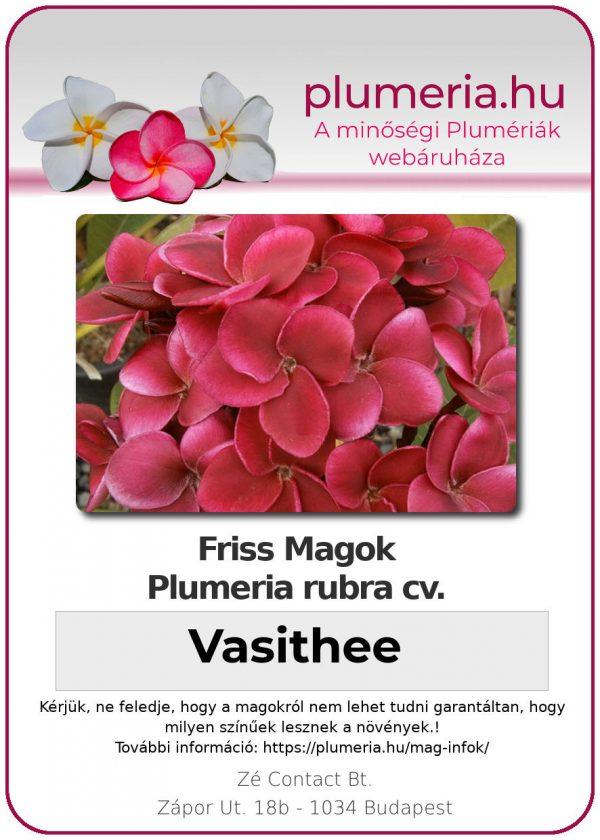 """Plumeria rubra """"Vasithee"""""""