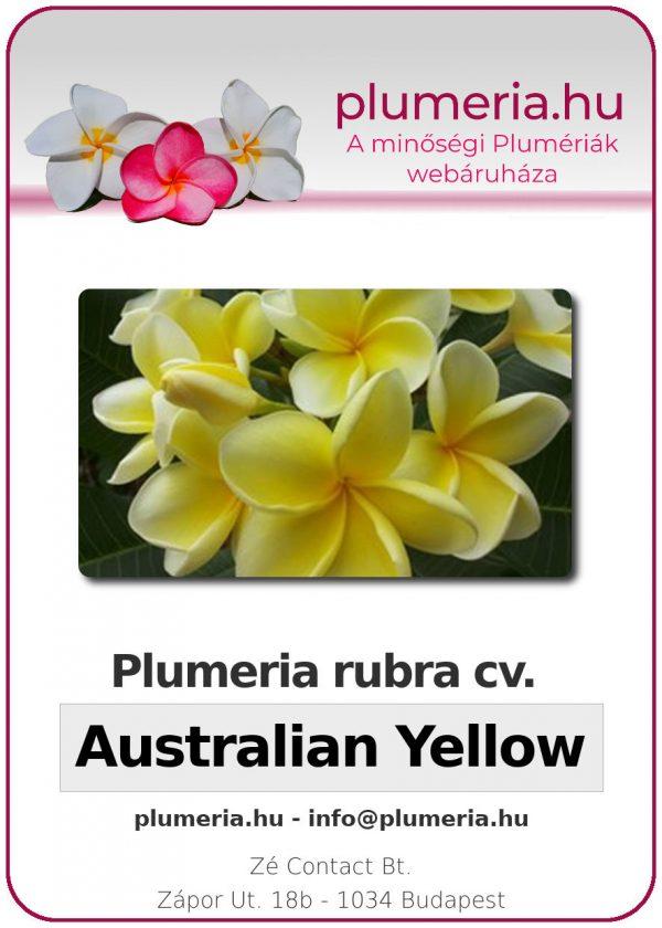 "Plumeria rubra ""Australian Yellow"""