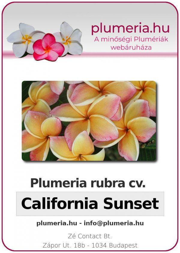 "Plumeria rubra ""California Sunset"""