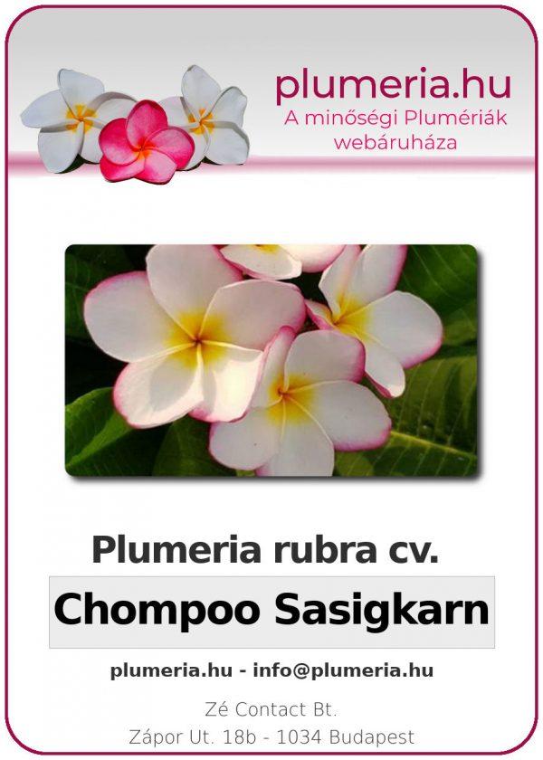 "Plumeria rubra ""Chompoo Sasigkarn"""