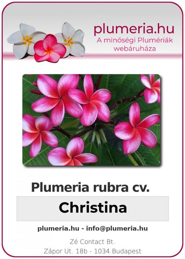 "Plumeria rubra ""Christina"""