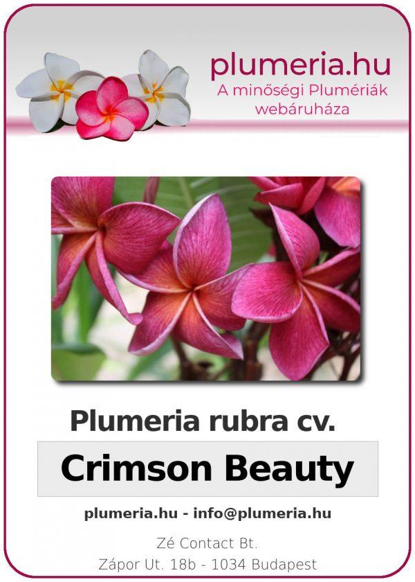 "Plumeria rubra ""Crimson Beauty"""