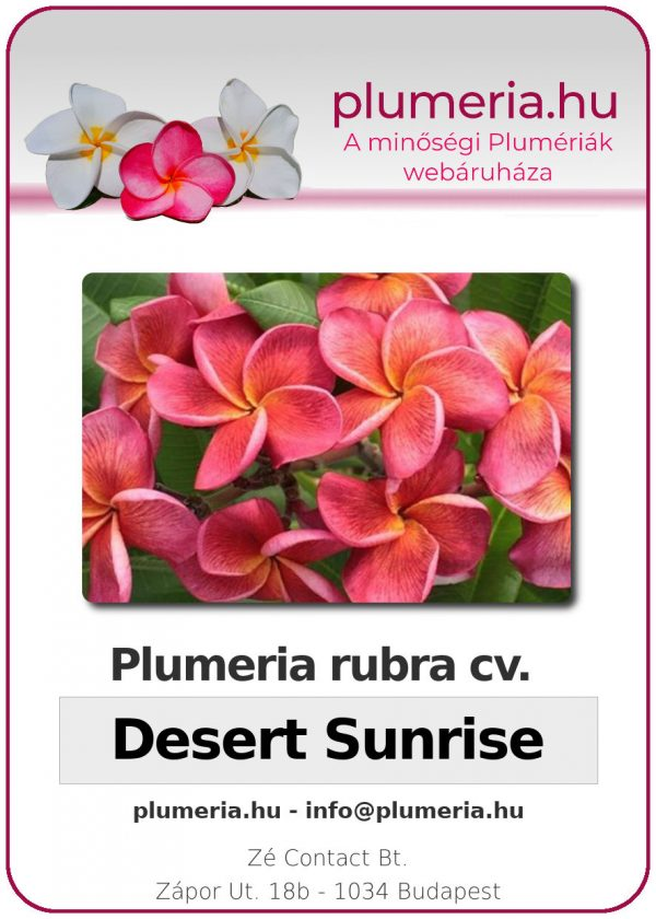 """Plumeria rubra """"Desert Sunrise"""""""
