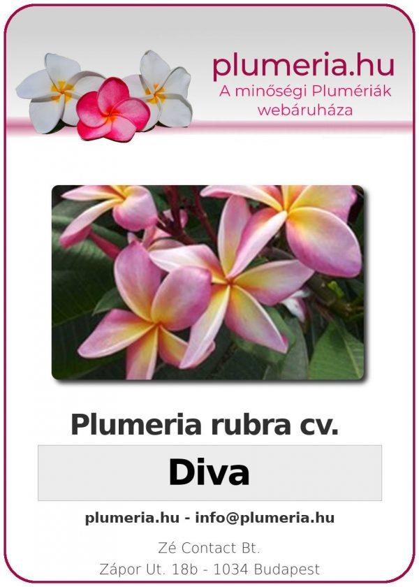 """Plumeria rubra """"Diva"""""""