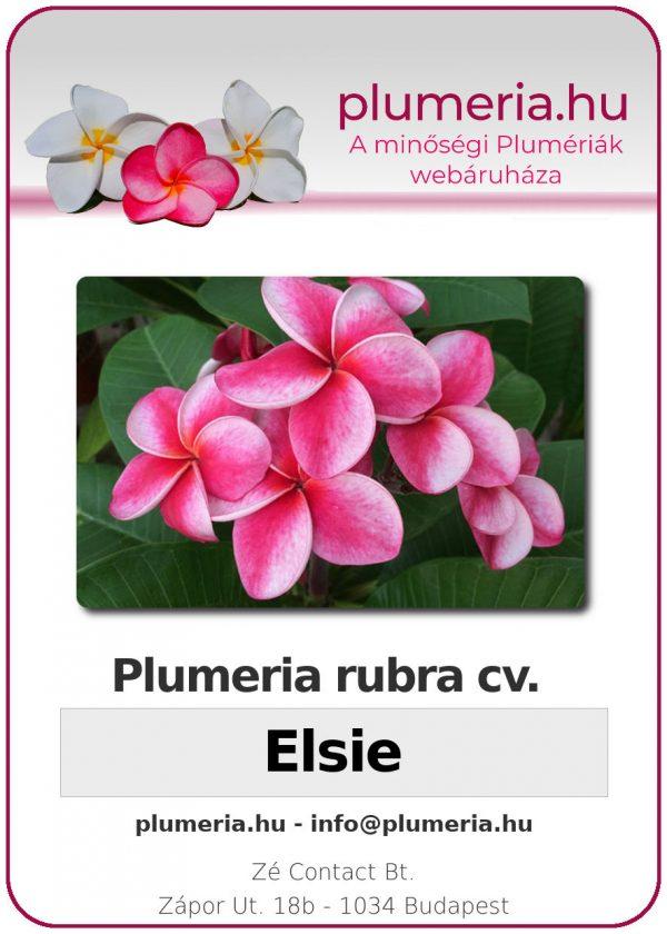 """Plumeria rubra """"Elsie"""""""