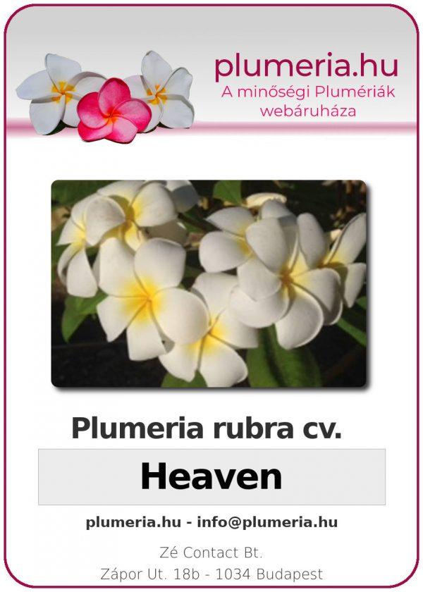 "Plumeria rubra ""Heaven"""