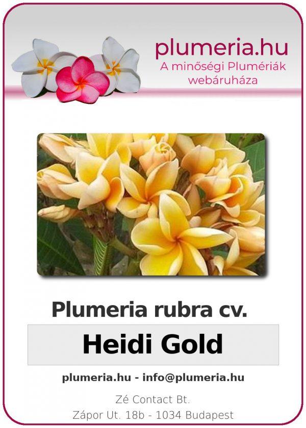 "Plumeria rubra ""Heidi Gold"""