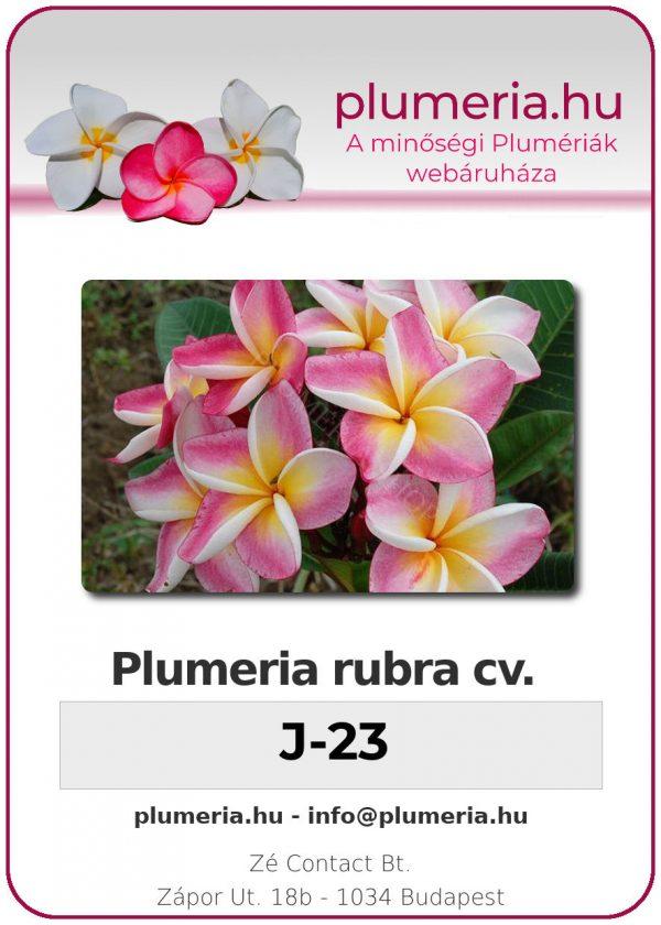 "Plumeria rubra ""J-23"""