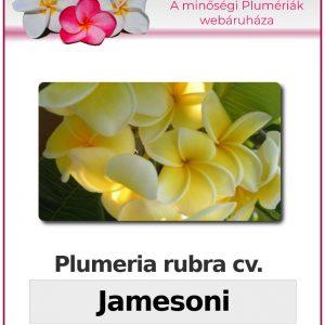 "Plumeria rubra ""Jamesoni"""