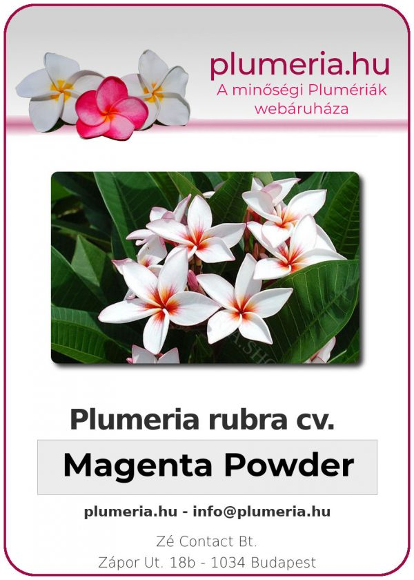 "Plumeria rubra ""Magenta Powder"""