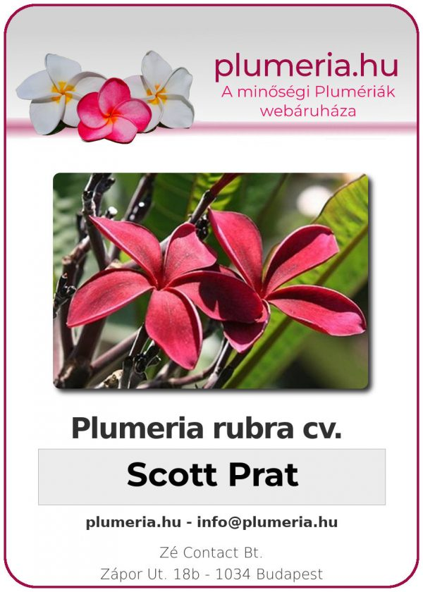 "Plumeria rubra ""Scott Prat"""