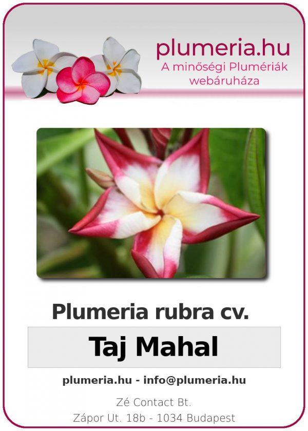 "Plumeria rubra ""Taj Mahal"""