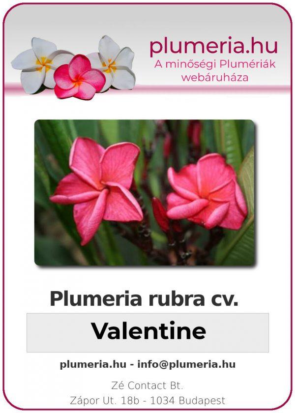 "Plumeria rubra ""Valentine"""