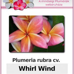 "Plumeria rubra ""Whirl Wind"""