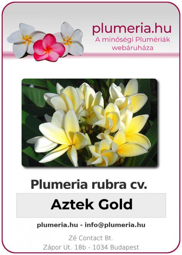 """Plumeria rubra """"Aztek Gold"""""""