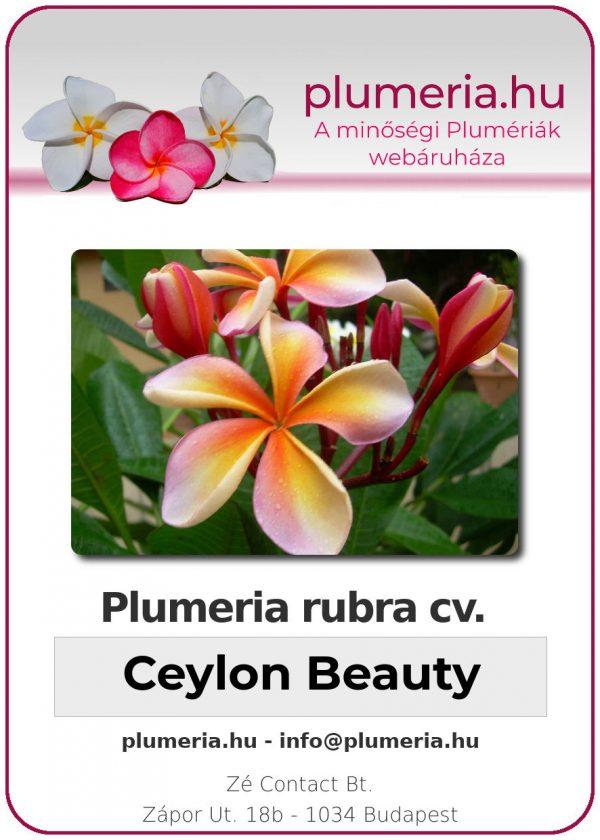 """Plumeria rubra """"Ceylon Beauty"""""""