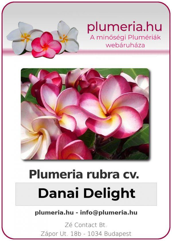 "Plumeria rubra ""Danai Delight"""
