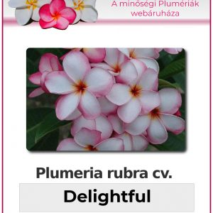 "Plumeria rubra ""Delightful"""