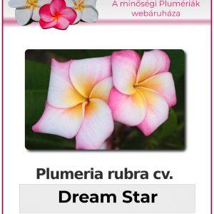 "Plumeria rubra ""Dream Star"""