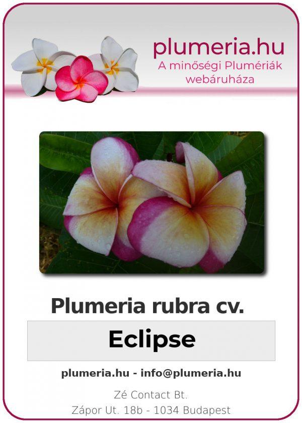 """Plumeria rubra """"Eclipse"""""""