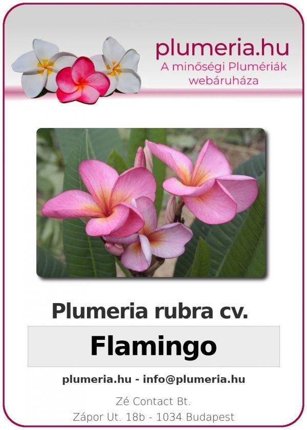 "Plumeria rubra ""Flamingo"""