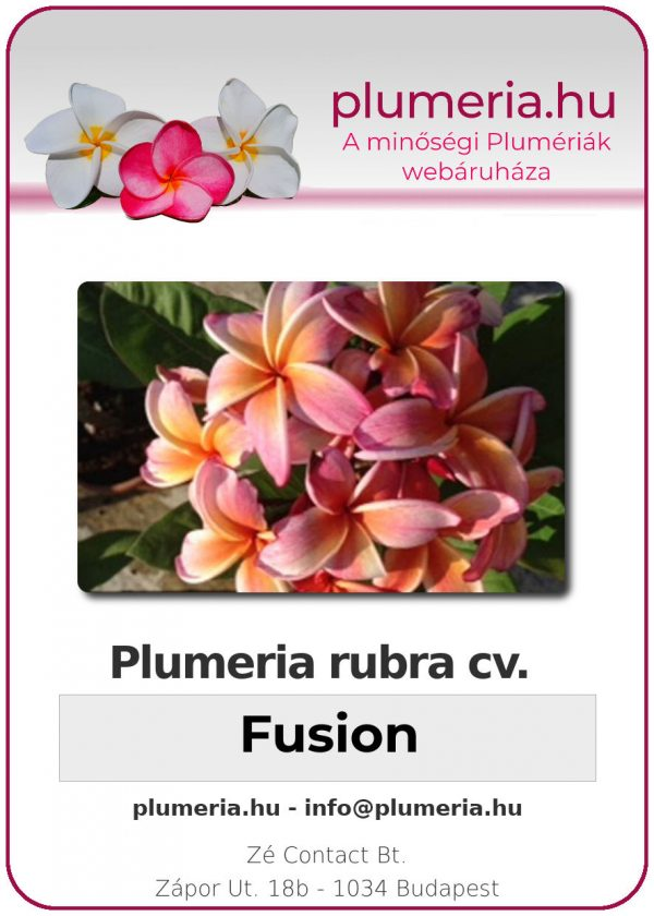 "Plumeria rubra ""Fusion"""