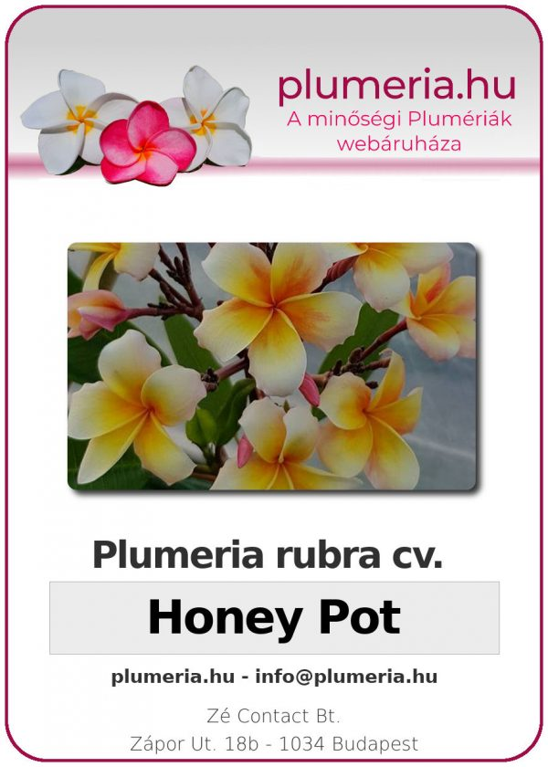 "Plumeria rubra ""Honey Pot"""