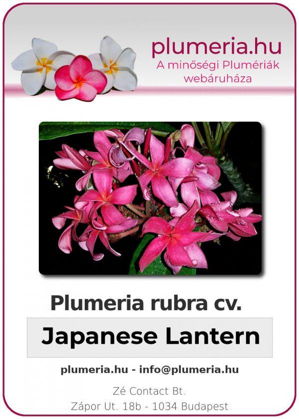 "Plumeria rubra ""Japanese Lantern"""
