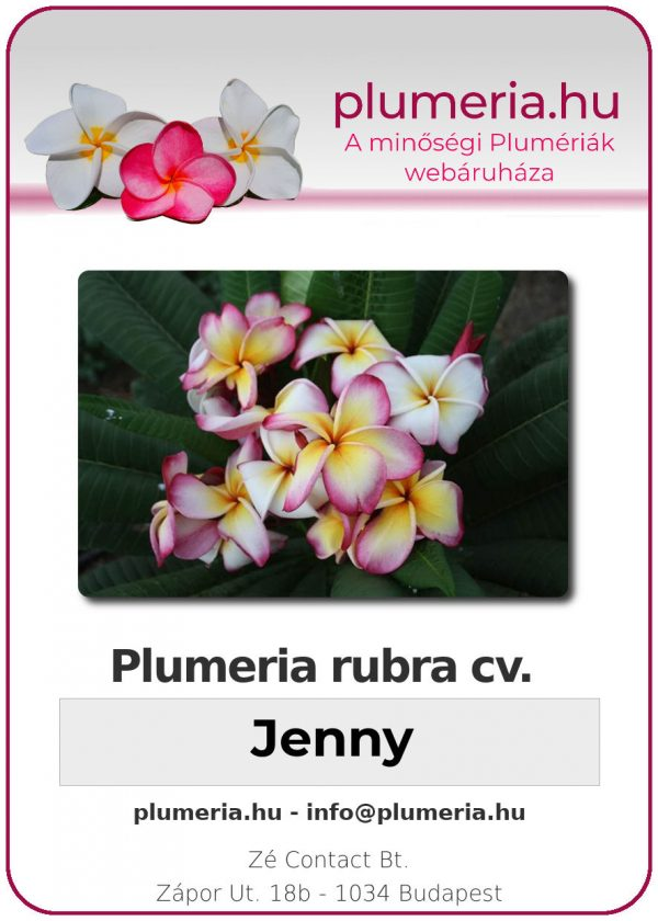 "Plumeria rubra ""Jenny"""