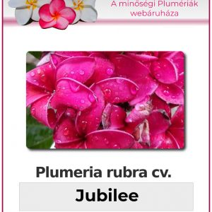 """Plumeria rubra """"Jubilee"""""""