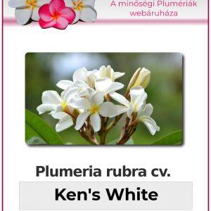 "Plumeria rubra ""Kens White"""
