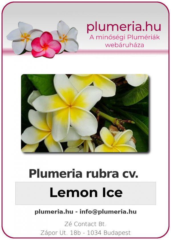 "Plumeria rubra ""Lemon Ice"""