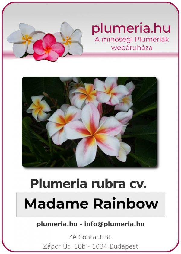 """Plumeria rubra """"Madame Rainbow"""""""