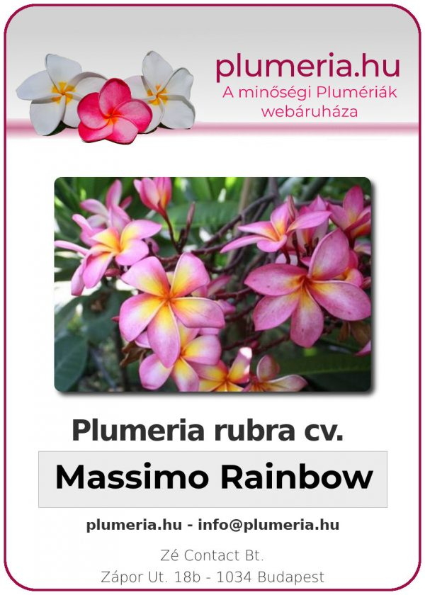 "Plumeria rubra ""Massimo Rainbow"""