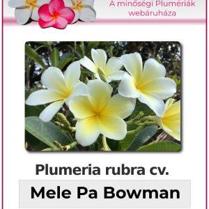 "Plumeria obtus ""Mele Pa Bowman"""