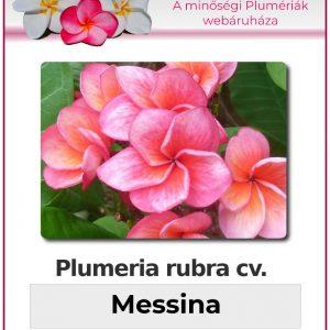 "Plumeria rubra ""Messina"""