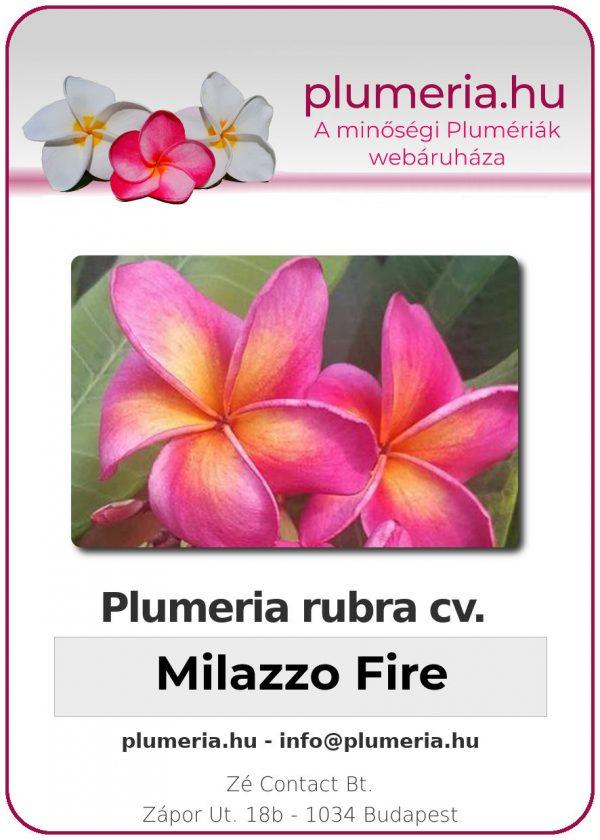 """Plumeria rubra """"Milazzo Fire"""""""
