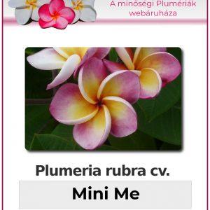"Plumeria rubra ""Mini Me"""
