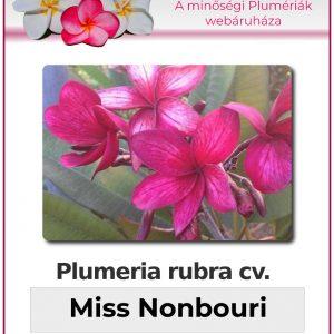 "Plumeria rubra ""Miss Nonbouri"""