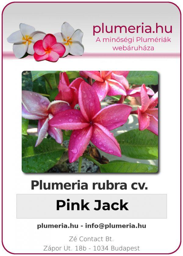 "Plumeria rubra ""Pink Jack"""