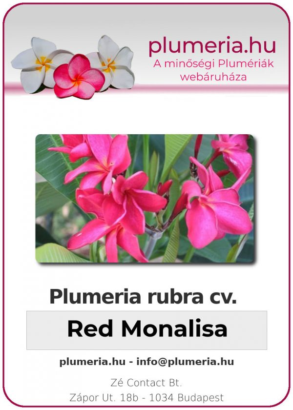 "Plumeria rubra ""Red Monalisa"""