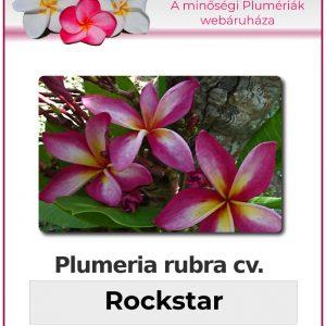 "Plumeria rubra ""Rockstar"""