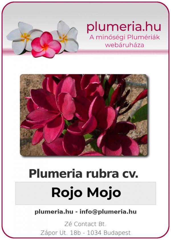 """Plumeria rubra """"Rojo Mojo"""""""