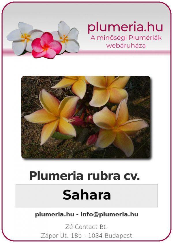 "Plumeria rubra ""Sahara"""