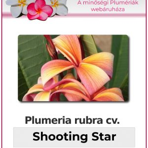 "Plumeria rubra ""Shooting Star"""