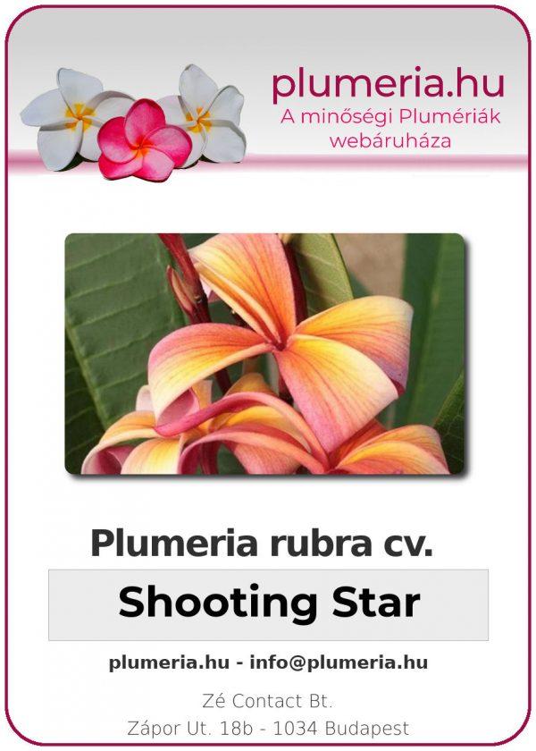 """Plumeria rubra """"Shooting Star"""""""