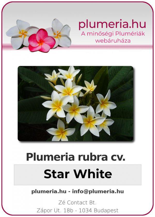 """Plumeria rubra """"Star White"""""""