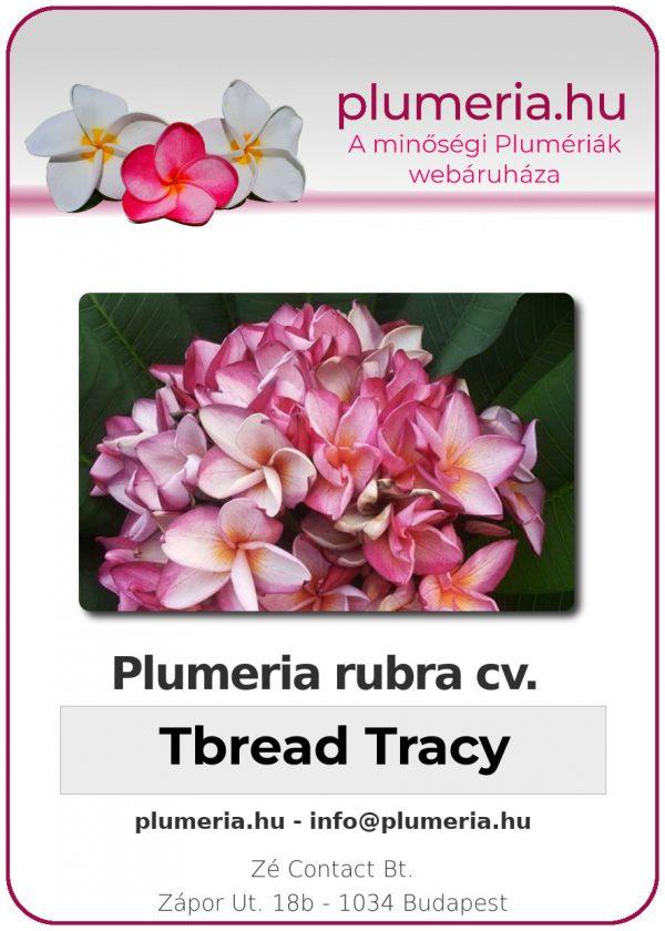 """Plumeria rubra """"Tbread Tracy"""""""